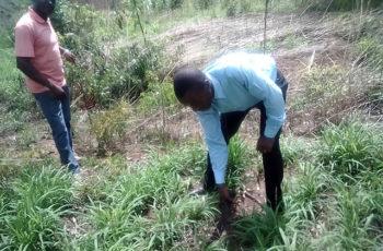Landbouw en Veeteelt Projecten